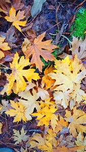 fall-leaves-250