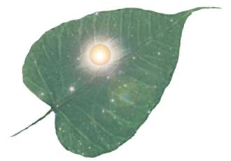 pipalla leaf sun-stars