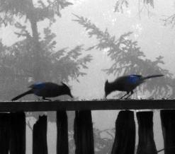 birdlandjournalbirds