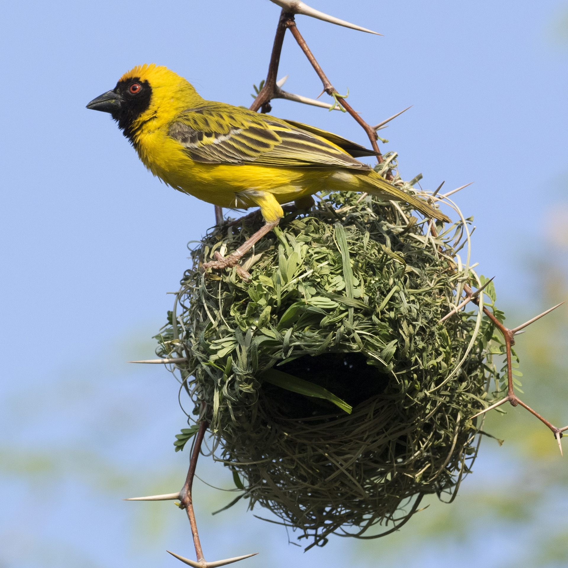 Bird on nest about the take flight